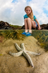 Starfish in rock pool by Paul Colley